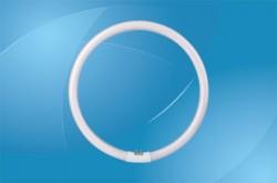 Circular Fluorescent Bulbs